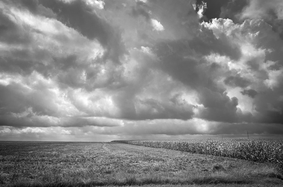 New Sweden, Texas Cornfield