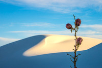 White Sands, New Mexico Yucca
